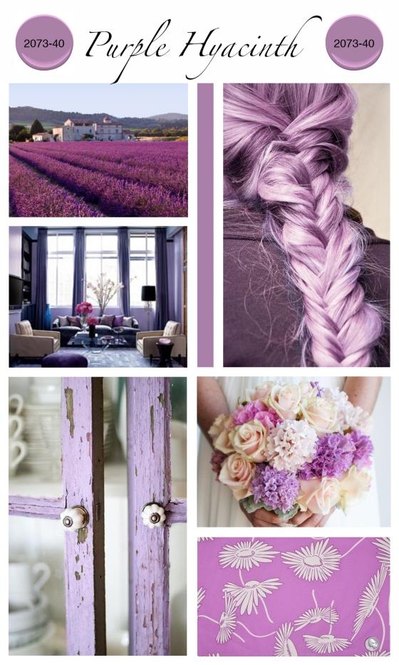 mhd_cotm_purple hyacinth
